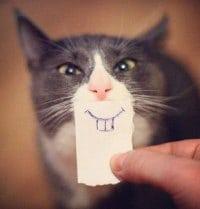 catsmilert